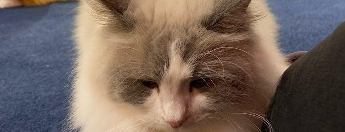Cat Cafe MOCHA is one of JPN.