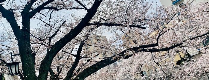 神田川桜並木 is one of Posti che sono piaciuti a Nonono.
