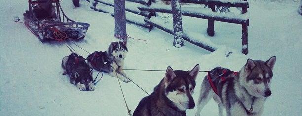 Arctic Circle Huskypark is one of Orte, die Simge gefallen.