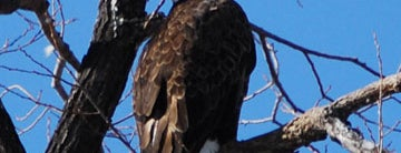 Klamath Basin National Wildlife Refuge Visitor Center is one of Bald Eagle Watching.