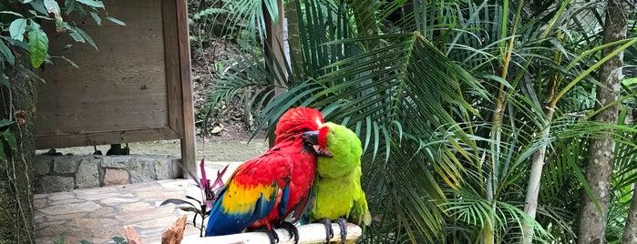 Macaw Mountain is one of Ollie'nin Beğendiği Mekanlar.