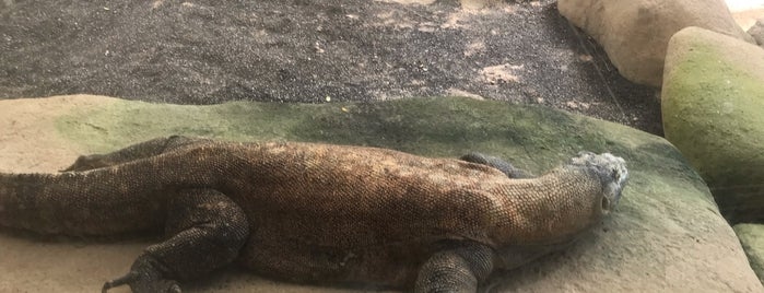 Singapore Zoo is one of สถานที่ที่ Yatie ถูกใจ.