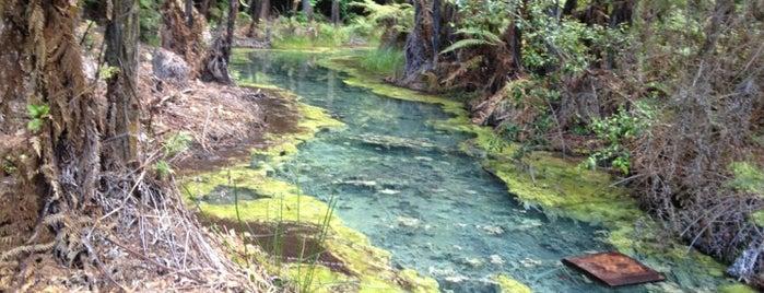 The Redwoods is one of Nuova Zelanda.