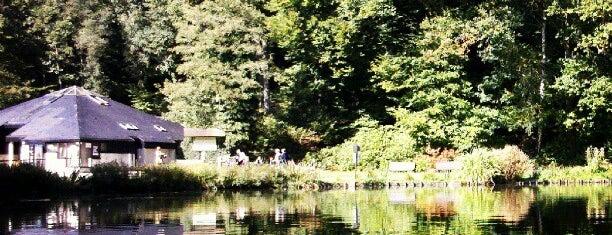 Domaine provincial du Bois des Rêves is one of Lieux qui ont plu à Matúš.