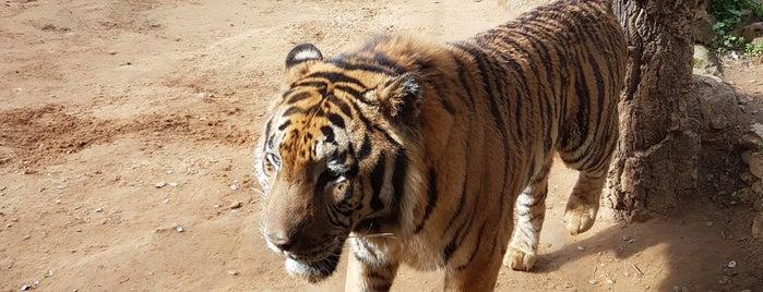 Zoo Castellar is one of Испания.
