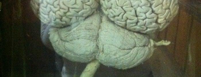 Музей эволюции мозга is one of Must visit.