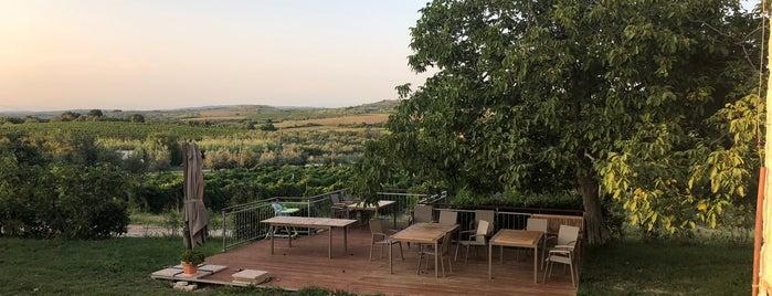 Veralda wine estate is one of Novigrad.