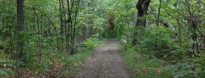 Bluecast Springs Preserve is one of Andrew : понравившиеся места.