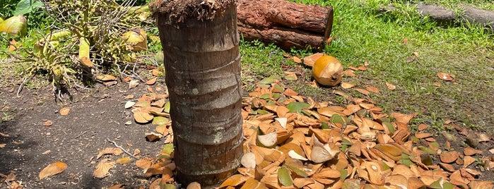Coconut Glen's is one of Maui.