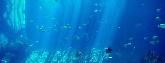 Georgia Aquarium is one of Spring Break in Atlanta.