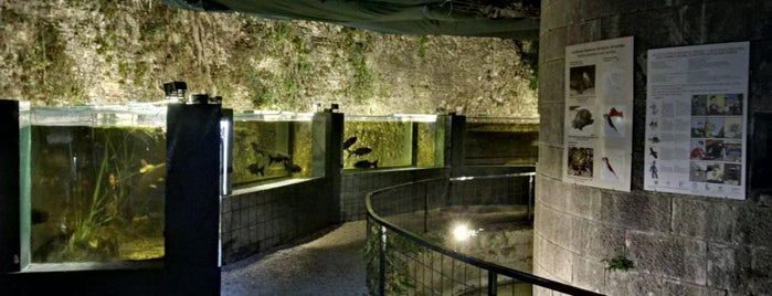 Aquarium Pula is one of Istria, Croatia.