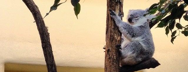Koala-Gehege is one of สถานที่ที่ Istvan ถูกใจ.