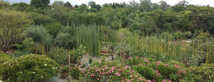 Jardin Etnobotanico De Oaxaca is one of Oaxaca, Mexico.