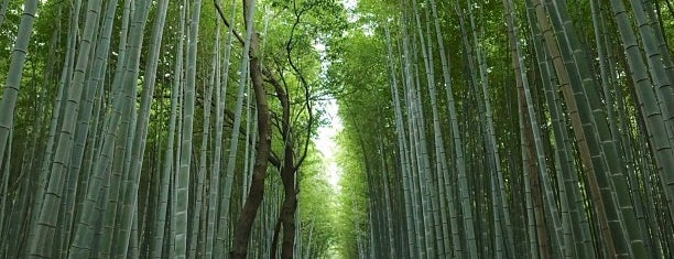 Arashiyama Bamboo Grove is one of Tempat yang Disukai Chris.