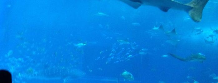 Ocean Blue is one of Lugares guardados de miozar.