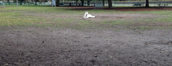 Walter Fuller Dog Park is one of places to try.