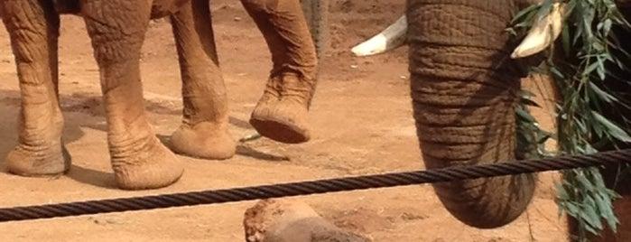 Elephant Exhibit is one of Daniel : понравившиеся места.