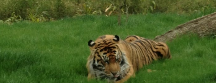 ZSL London Zoo is one of London - All you need to see!.