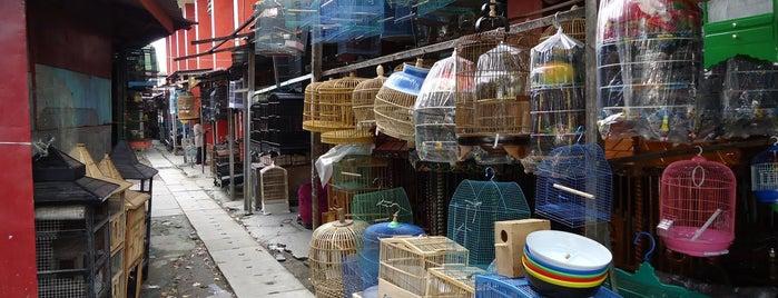 Pasar Burung Bratang is one of Characteristic of Surabaya.
