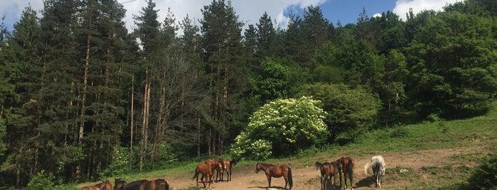 "Природен Парк ""Врачански Балкан"" is one of สถานที่ที่ Antoaneta ถูกใจ."