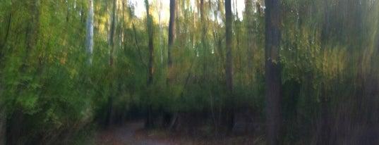 Rock Creek Trail is one of Posti che sono piaciuti a Debbie.