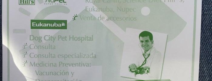 Dog City Pet Hospital is one of Valeria 님이 좋아한 장소.