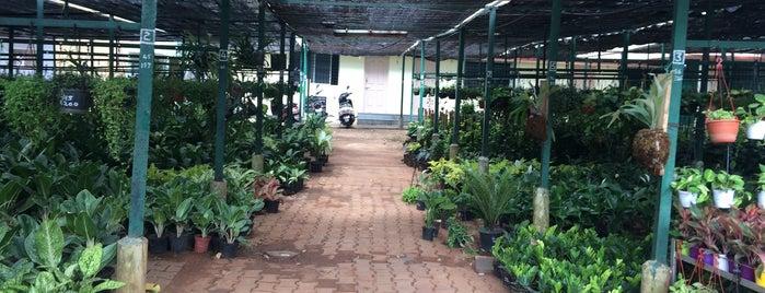 The Nurserymen Co Op Society Ltd is one of Lugares favoritos de Jyothsna.