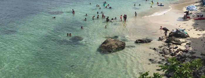 Isla Del Coral is one of Sayulita.