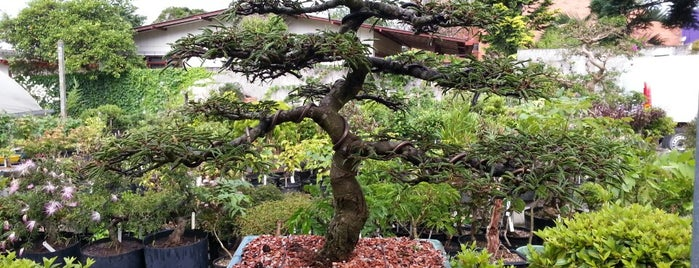 O Bonsai is one of CWB - Floriculturas.