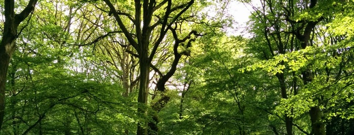 Highgate Wood is one of Ancient woodland in London.