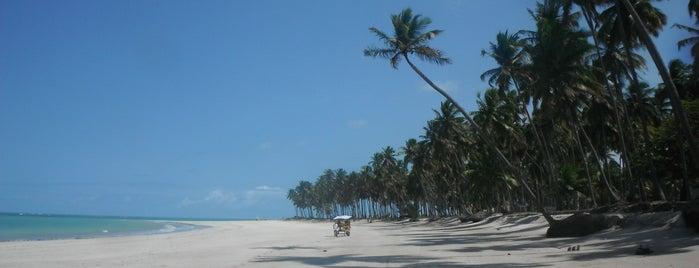 Praia dos Carneiros is one of Porto de Galinhas, Brasil.