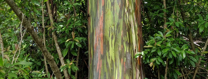 Painted Trees is one of Hawaii.