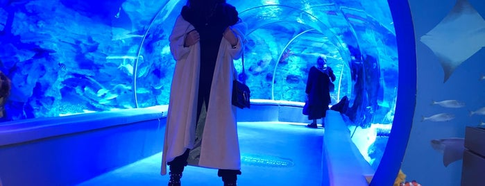 Emaar Aquarium & Underwater Zoo is one of İnciさんのお気に入りスポット.