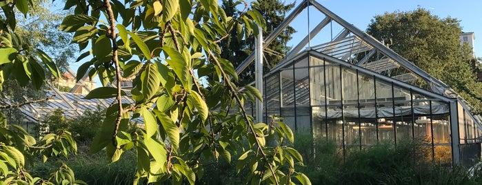"Orto Botanico Universitario ""Casina Rosa"" is one of Tempat yang Disimpan María."
