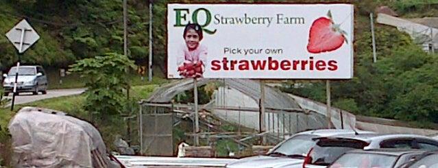 EQ Strawberry Farm is one of Cameron Highlands.