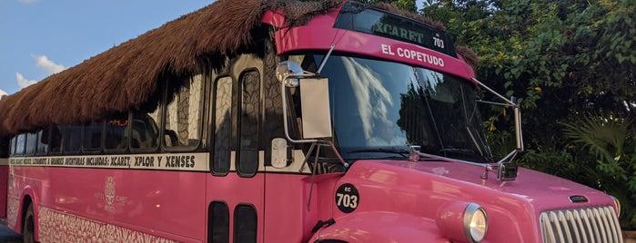 Hotel Xcaret Mexico is one of Tanya : понравившиеся места.