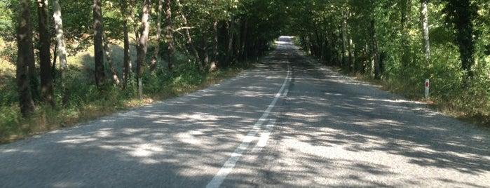 Karabük Ağaç Tüneli Yolu is one of Erkanさんのお気に入りスポット.