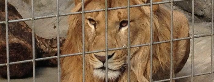 OKINAWA Zoo & Museum is one of Orte, die Stephanie gefallen.
