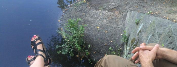 Shu Swamp is one of Lugares favoritos de Zachary.