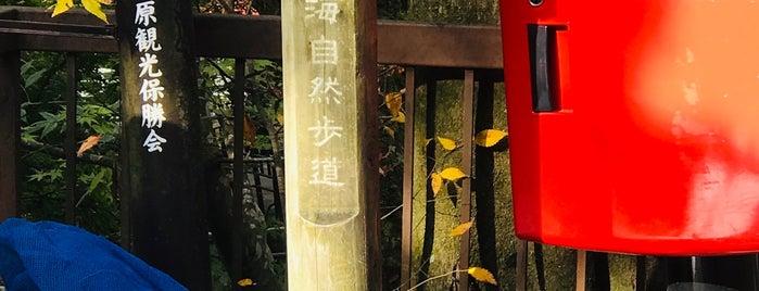 魚山園 is one of Kansai Trip.