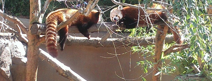 Panda Canyon is one of San Diego, California.