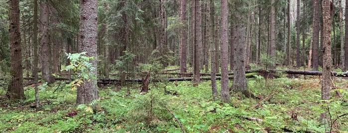 Haltialan aarnimetsäalue is one of Lugares favoritos de T..