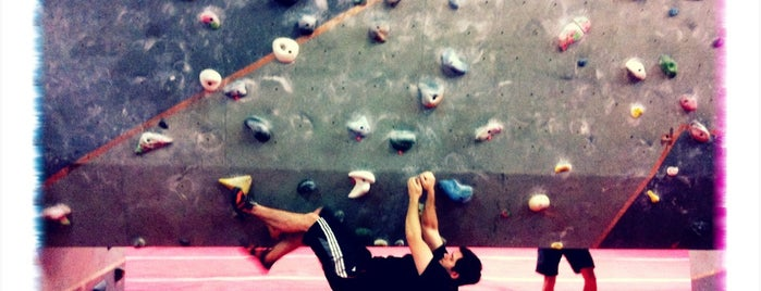 The Arch Climbing Wall - Biscuit Factory is one of Wheat/Gluten/Dairy free success :D.