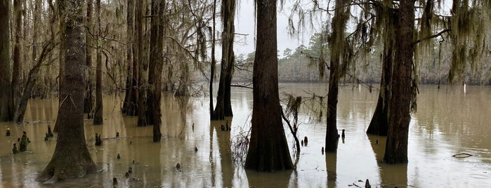 Caddo Lake State Park is one of CBS Sunday Morning 2.