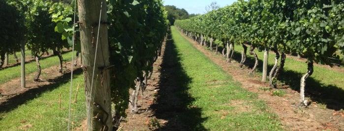 Carolyn's Sakonnet Vineyard is one of Newport Coastal Wineries.