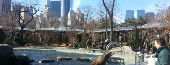 Zoo de Central Park is one of New York, things to do.