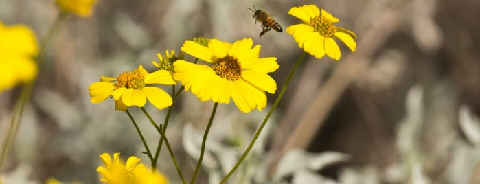 Honeybee Canyon Park is one of Lugares favoritos de Ben.