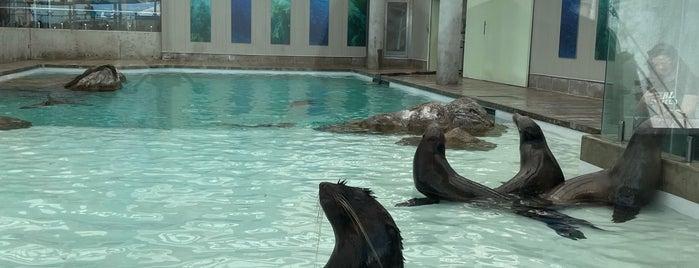 Marine Mammal Center at New England Aquarium is one of Boston, Massachusetts.