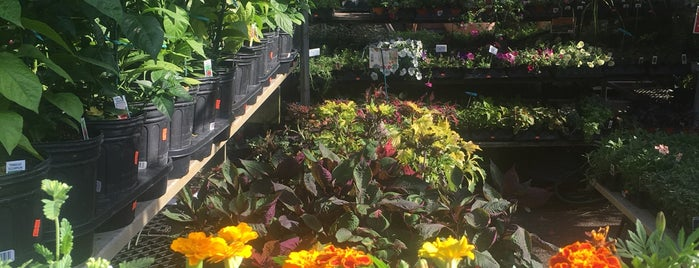 Adams & Son Gardens is one of Green Thumb.