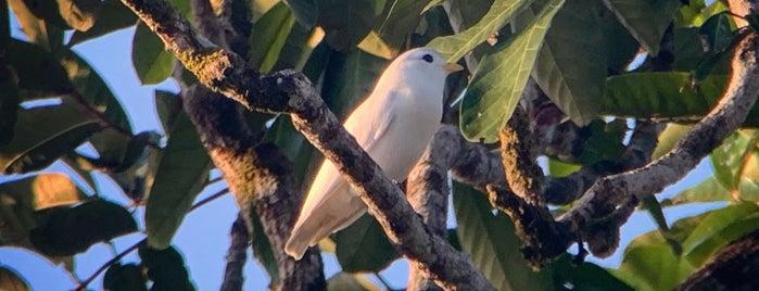 Rincon De Osa is one of Costa Rica.